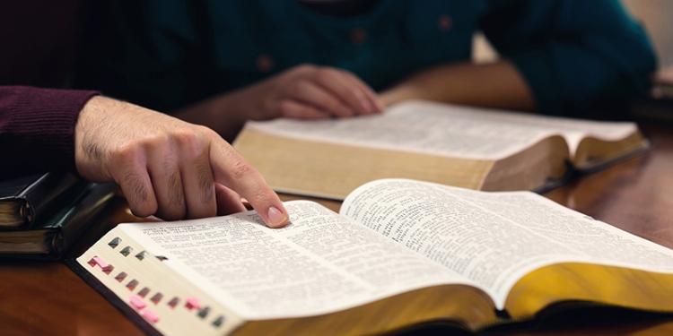 tradução da biblia